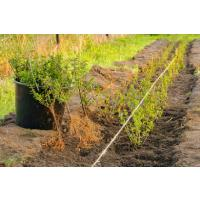 Bare Root and Root Ball Planting Tips