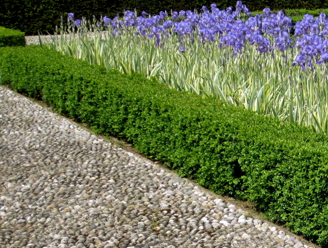 Box Or Buxus Hedging Help And Advice