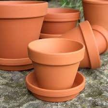 Plant Pot Size Guide