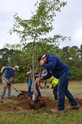 Planting Shrubs and Trees