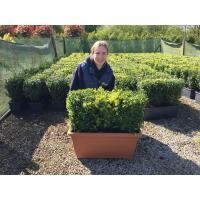 Instant Hedging Troughs