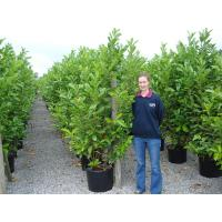 New Seasons Hedging Available to Pre Order