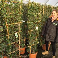 Stilted & Wall Frame Hedging