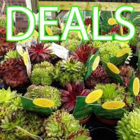 Deals & Multi-Buys