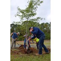 Planting Shrubs & Trees