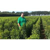 Root-Balled Hedging