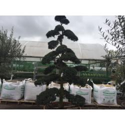 Plant Help & Advice