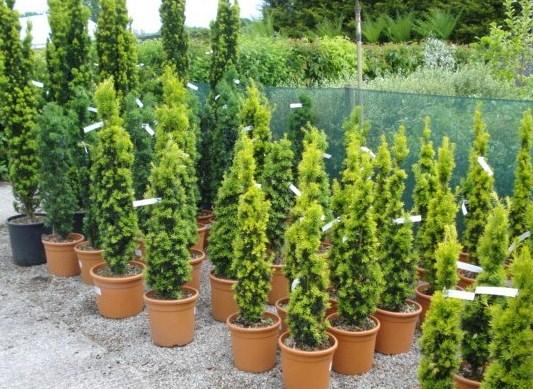Topiary Columns