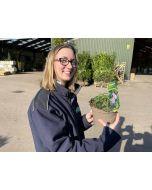 Geranium Blushing Turtle 2 Litre Pot