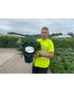 Rhododendron Hybrid Cunninghams White 7.5 Litre Pot