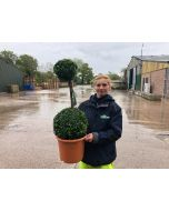 Buxus Sempervirens Duo-Ball Stack 10 Litre Pot