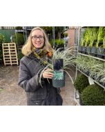 Carex Everest 2 Litre Pot