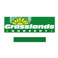 Green Leylandii Hedging 2.5 Litre Pot 90-100cm