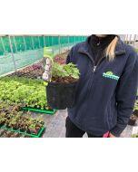 Geranium Coobland White 2 Litre Pot