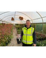 Hydrangea Paniculata Fraise Melba 4.5 Litre Pot
