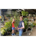 Hibiscus Syriacus Eruption 4.5 Litre Pot