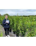 Thuja plicata Martin 12 Litre Pot Grown 140/150cm