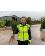 Yew Hedging Bare Root 25-30 cm
