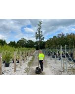 Sorbus Olympic Flame Heavy Standard 35 Litre Pot