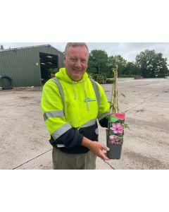 Clematis Hagley Hybrid 1.5 Litre Pot