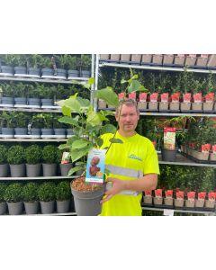 Magnolia Genie 4.5 Litre Pot