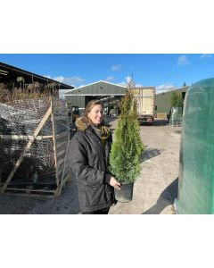 Thuja Occidentalis Emerald 4.5 Litre Pot 60/80cm