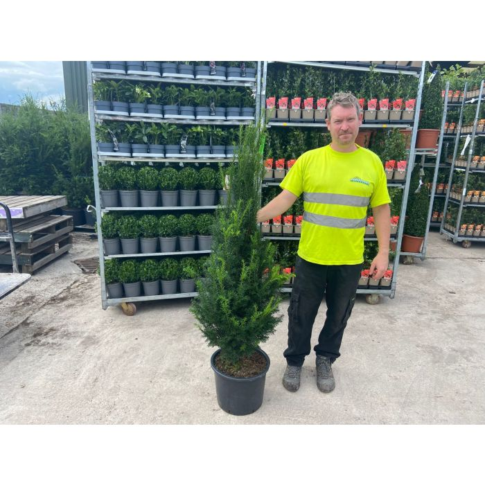 yew 20 litre 120/140