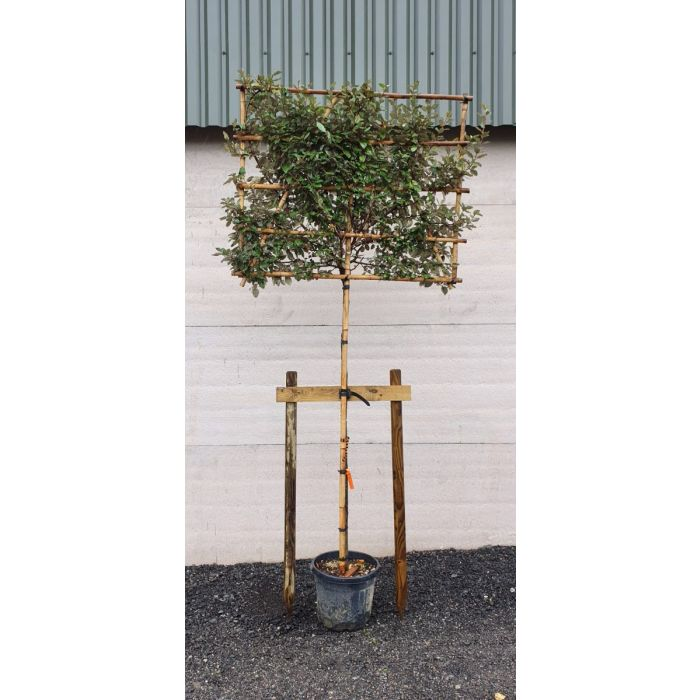 Heavy Duty Tree Staking Kit