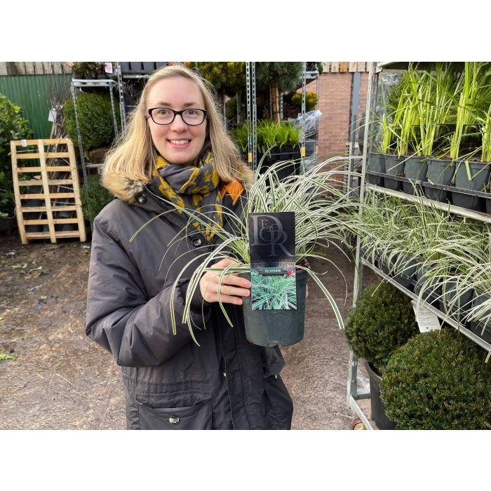 Carex Everest 2 Litre Pot
